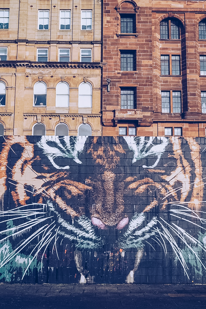tiger street art glasgow