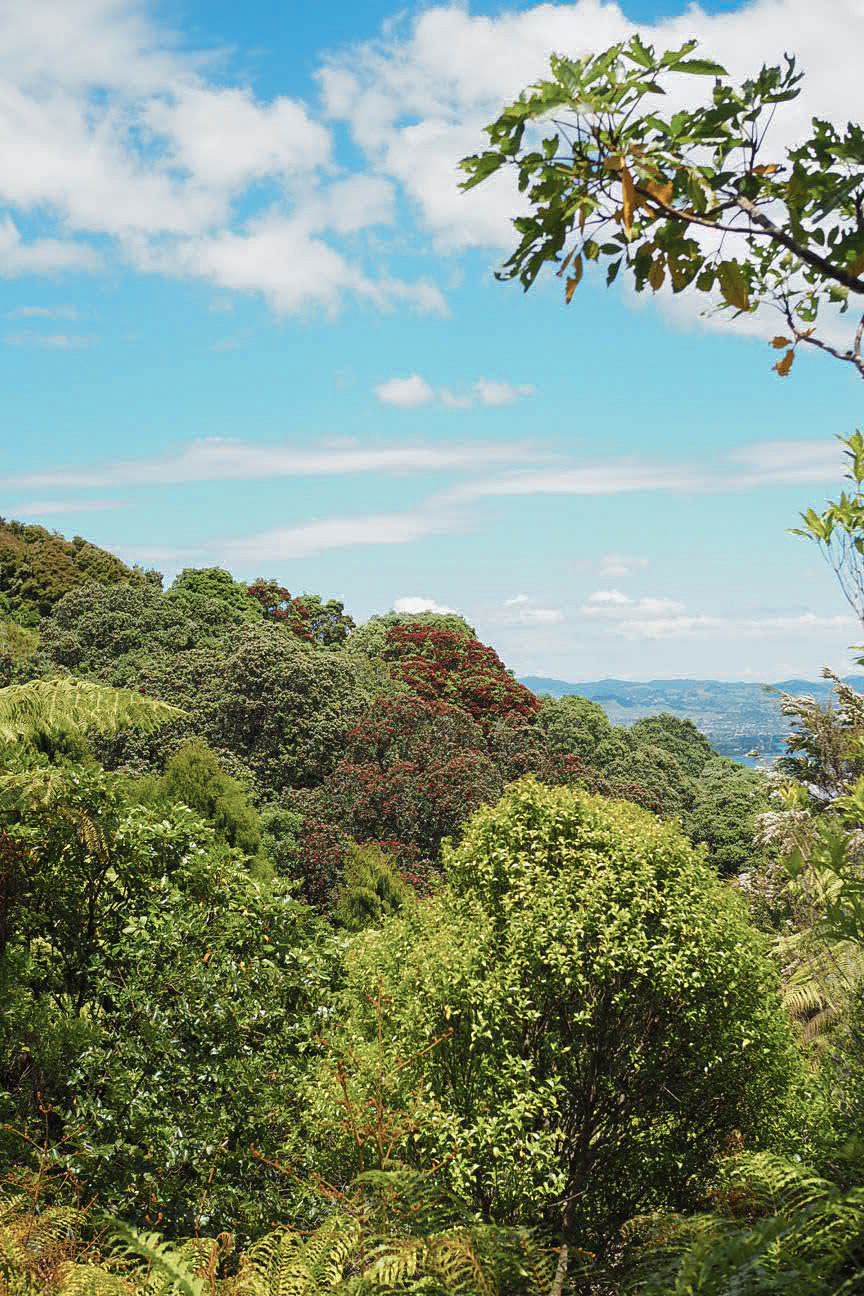 Trees at the top of Mount Maunganui