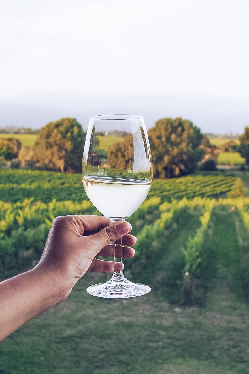 glass of white wine at a vineyard
