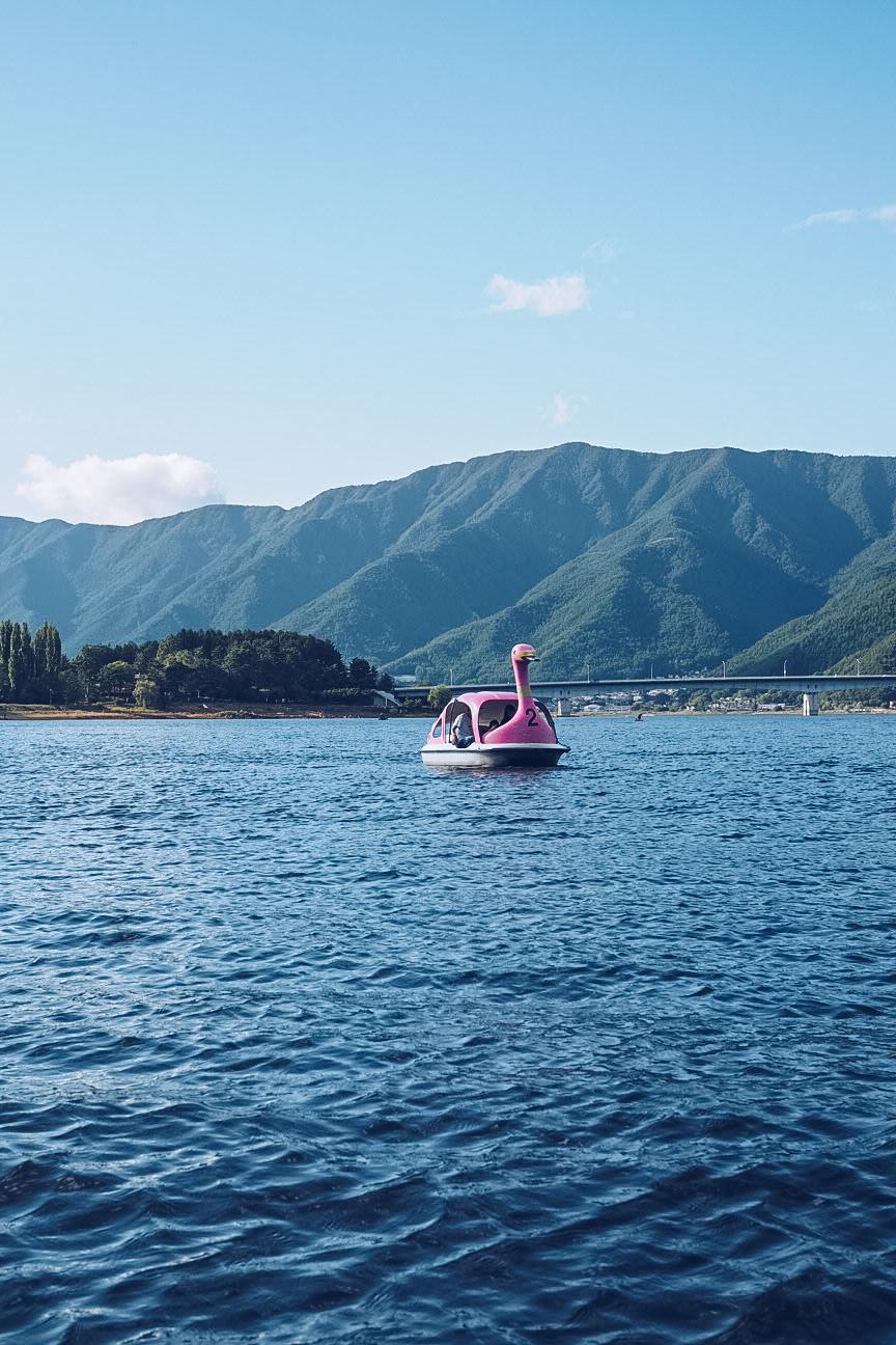 pink swan pedalo on lake kawaguchiko