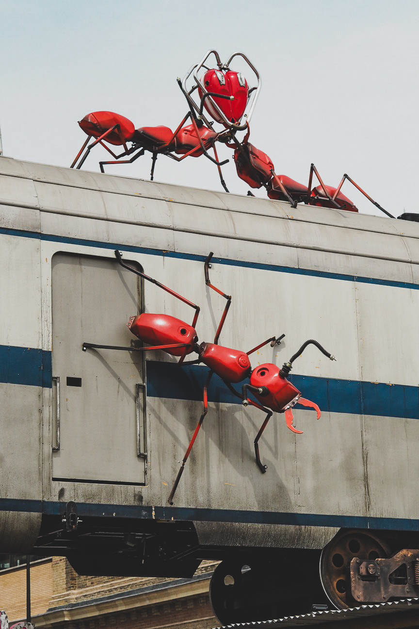 vinegar yard ants art