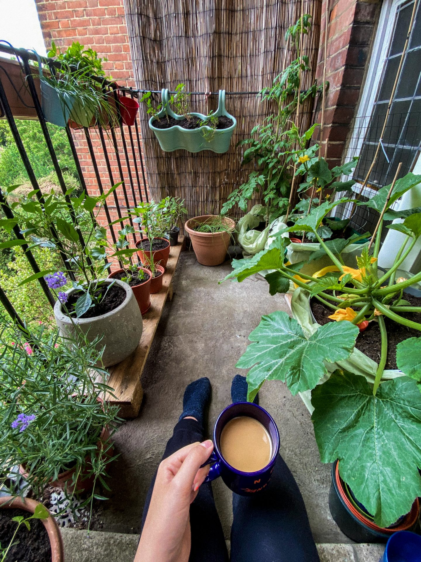 charlie's POV as she sits on her balcony with a cup of tea in front of her and surrounded my various plants